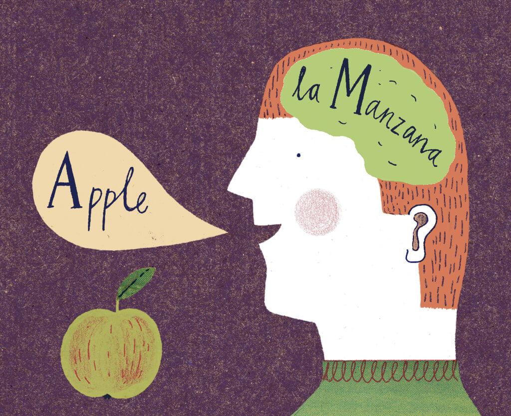 Bộ não của trẻ phát triển song ngữ